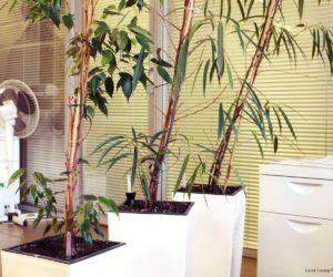 Plantes décoratives dans les bureaux de Carré France
